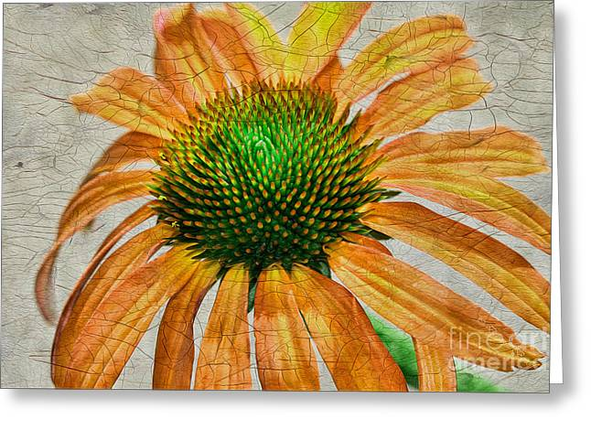 Cone Flowers Greeting Cards - Orange Crackle Greeting Card by Deborah Benoit