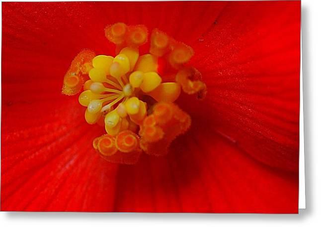 Pestal Greeting Cards - Orange Crush Greeting Card by Peter Feo