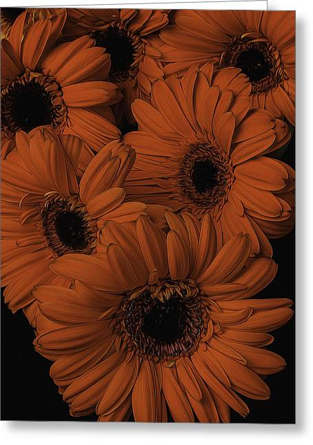 Daises Greeting Cards - Orange Daisy Bouquet Greeting Card by Garry Gay