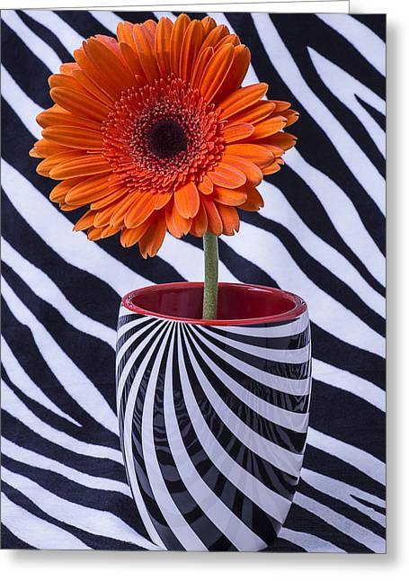 Beautiful Zebra Greeting Cards - Orange Daisy in Striped Cup Greeting Card by Garry Gay