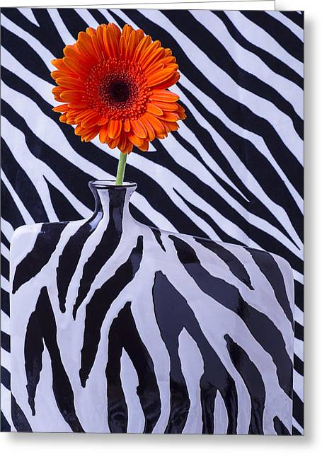 Beautiful Zebra Greeting Cards - Orange Daisy in Zebra Vase Greeting Card by Garry Gay