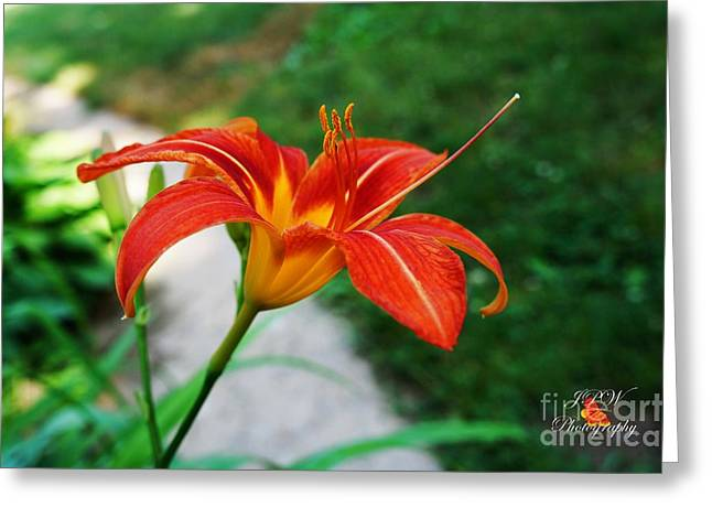 Day Lilly Greeting Cards - Orange Day Lilly  Greeting Card by Jannice Walker