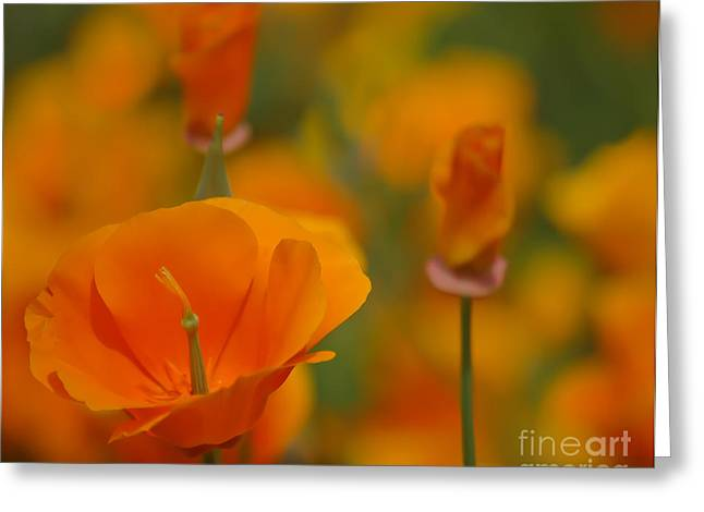 Orange Delight Greeting Card by Nick  Boren