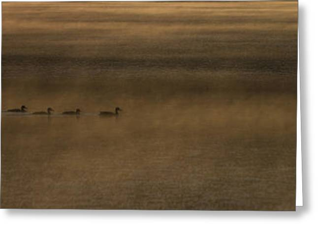 British Columbia Greeting Cards - Orange Ducks Greeting Card by Aaron S Bedell