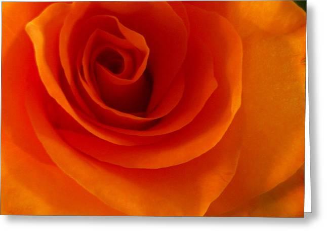 Julie Magers Soulen Greeting Cards - Orange Flame Fatale Garden Rose Greeting Card by Julie Magers Soulen