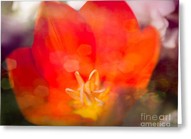 Texture Floral Greeting Cards - Orange Flower Power Greeting Card by Sonja Quintero