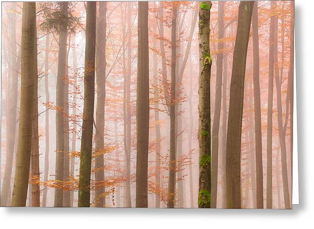 Haze Photographs Greeting Cards - Orange Fog Greeting Card by Alexander Kunz