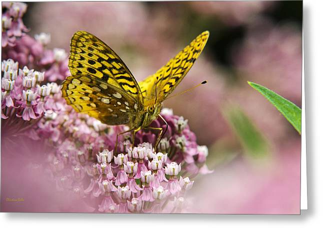 Butterfly On Flower Greeting Cards - Orange Fritillary Butterfly On Pink Milkweed Flowers Greeting Card by Christina Rollo