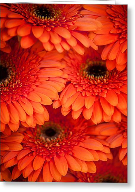 Essential Greeting Cards - Orange Gerbera 1. Amsterdam Flower Market Greeting Card by Jenny Rainbow