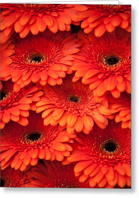 Essential Greeting Cards - Orange Gerbera 2. Amsterdam Flower Market Greeting Card by Jenny Rainbow