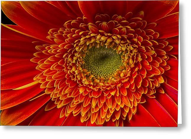 Mum Greeting Cards - Orange Gerbera Daisy Greeting Card by Garry Gay
