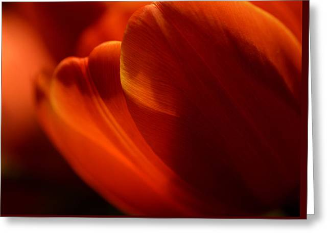 Orange Glow Tulips Greeting Card by Julie Palencia