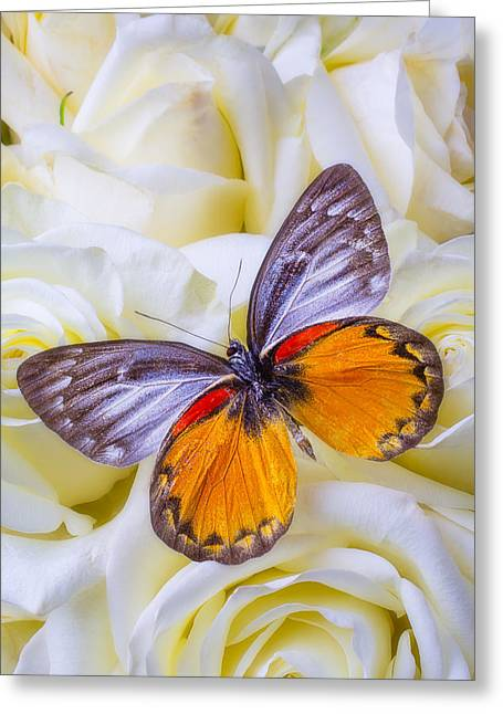 Seasonal Bloom Greeting Cards - Orange gray butterfly Greeting Card by Garry Gay