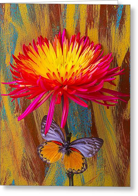 Antenna Greeting Cards - Orange Gray Butterfly On Mum Greeting Card by Garry Gay