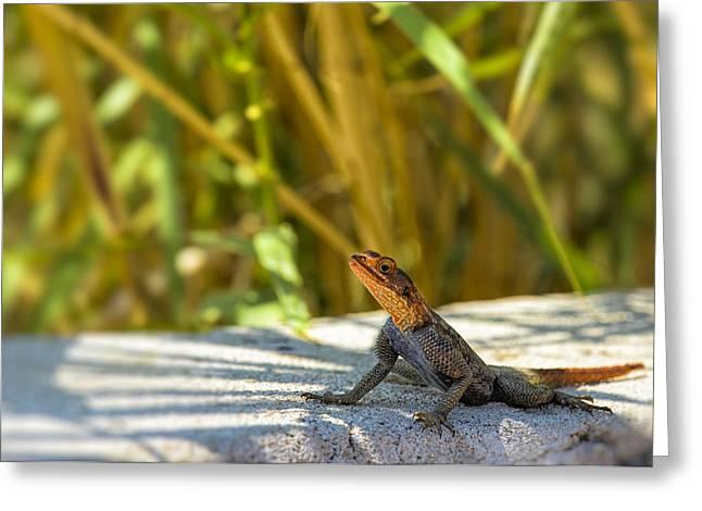 Lizard Head Greeting Cards - Orange Headed Lizard Greeting Card by Paul W Sharpe Aka Wizard of Wonders