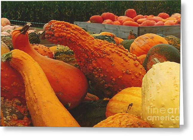 Farm Stand Greeting Cards - Orange Horn Gourd Greeting Card by Jane Butera Borgardt