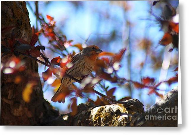 Birds Greeting Cards - Orange House Finch Greeting Card by Mrsroadrunner Photography