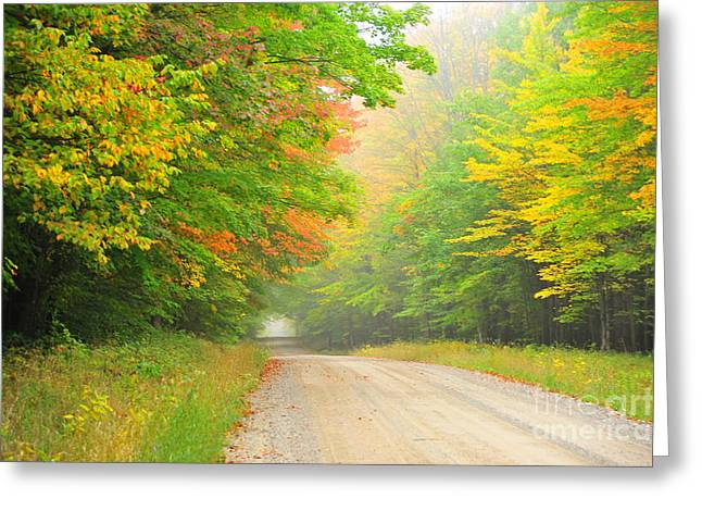 Fall Trees Greeting Cards - Orange Kissed Greeting Card by Terri Gostola