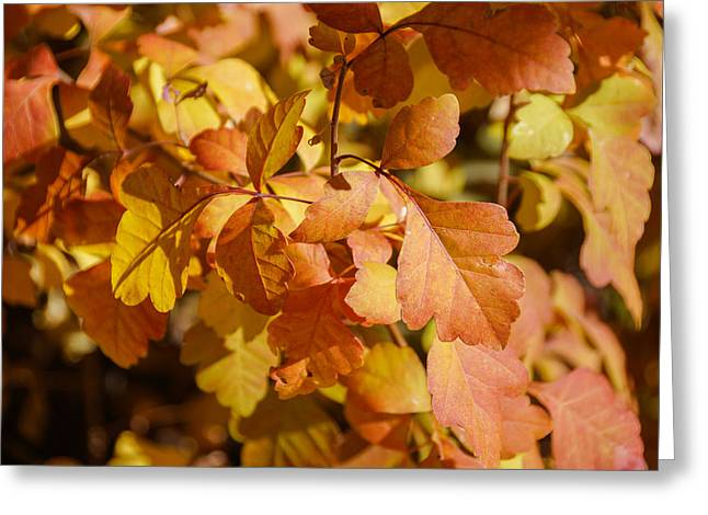 Gold Leave Greeting Cards - Orange leaves Greeting Card by Gloria Pasko