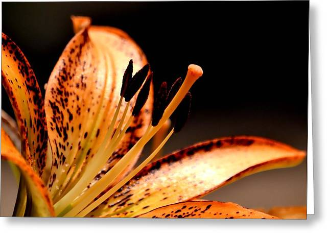 Nature Center Greeting Cards - Orange Lily Greeting Card by Deena Stoddard