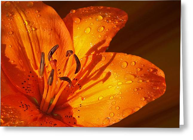 Garden Petal Image Greeting Cards - Orange Lily in Sunshine after the Rain Greeting Card by Gill Billington