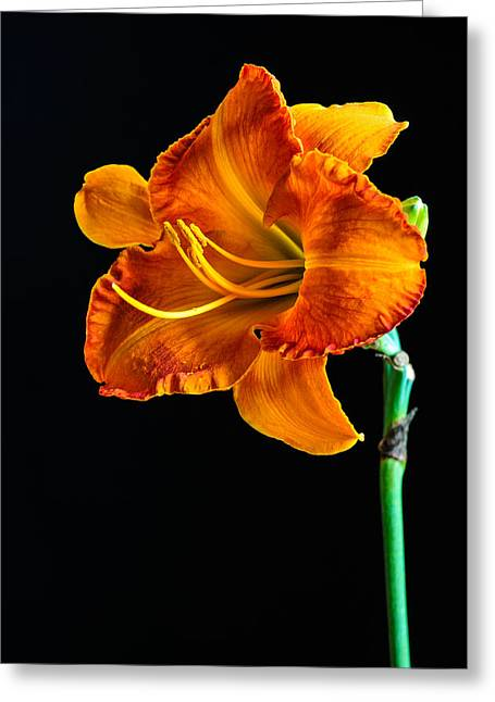 Lilies Pyrography Greeting Cards - Orange Lily Greeting Card by Randy Walton