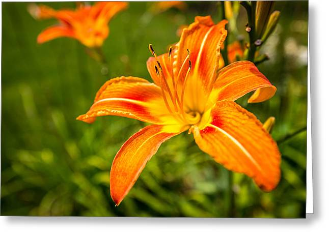 Cassablanca Greeting Cards - Orange Lily Greeting Card by Todd Reese