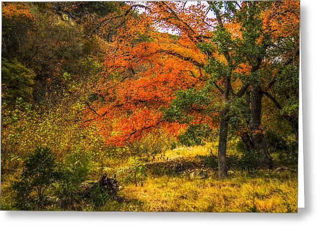 Fallscape Greeting Cards - Orange Maples under a Hill Greeting Card by Fred Adsit