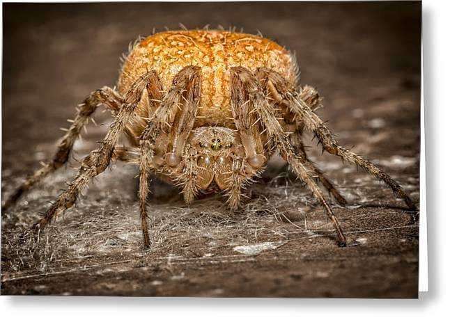 Marble Eye Greeting Cards - Orange Marbled Orb Weaver Greeting Card by Adam Romanowicz
