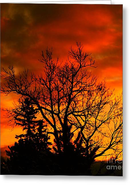 Winter Trees Mixed Media Greeting Cards - Orange Morning Greeting Card by Marjorie Imbeau