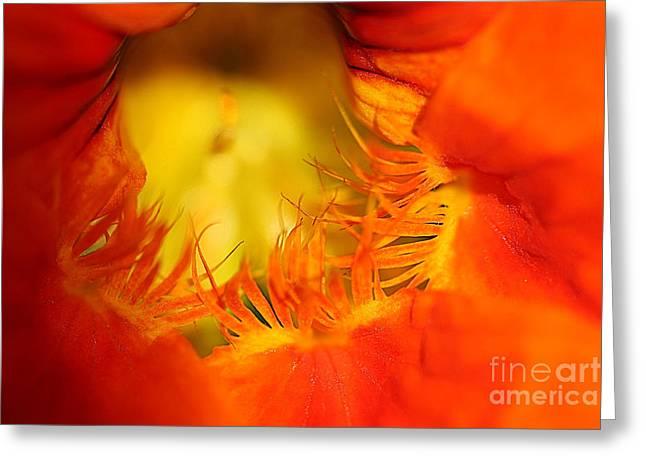 Grow Inside Greeting Cards - Orange Nasturtium Heart Greeting Card by Corey Ford
