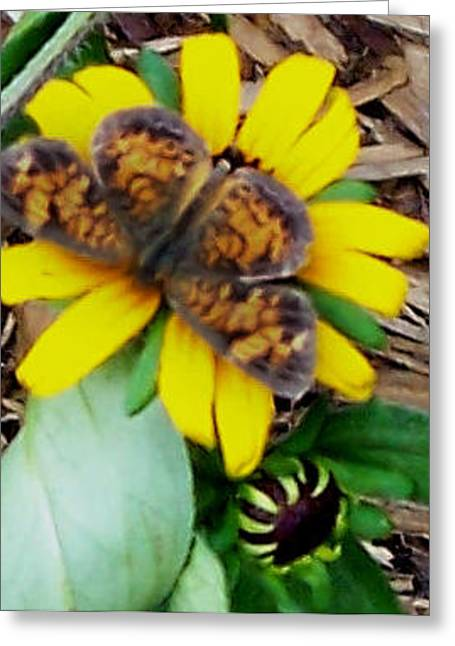 Butterflies Greeting Cards - Orange on Yellow Greeting Card by Hollye Knox