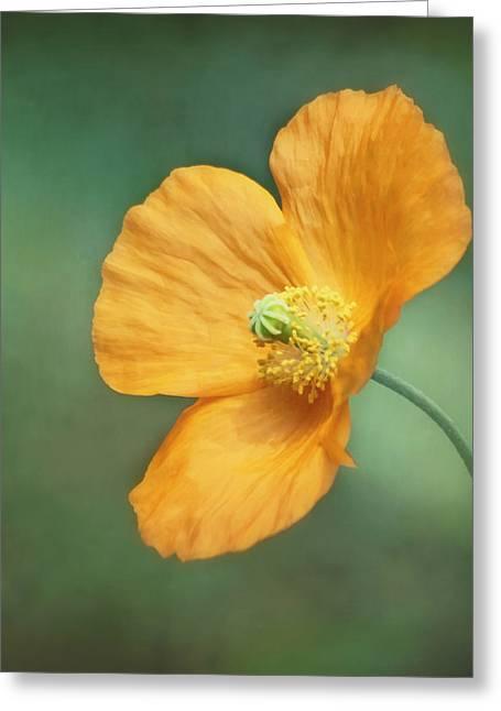 Feminine Image Greeting Cards - Orange Pop Greeting Card by Kim Hojnacki