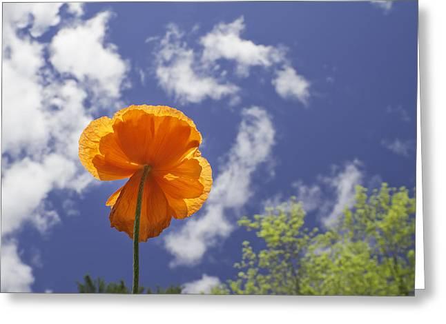 Florescence Greeting Cards - Orange Poppy - Blue Sky Greeting Card by Keith Webber Jr
