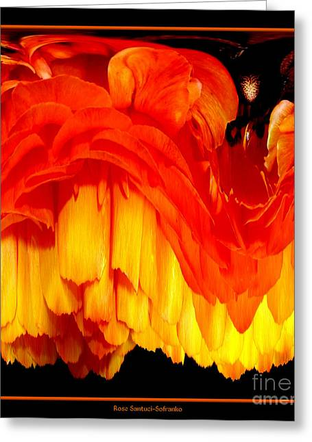 Dripping Rose Greeting Cards - Orange Ranunculus Abstract Greeting Card by Rose Santuci-Sofranko
