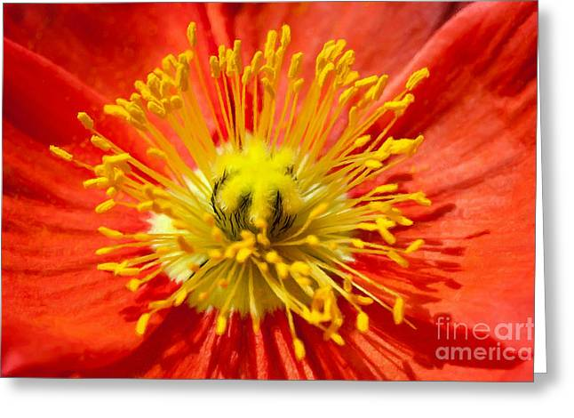 Best Sellers -  - Botanical Greeting Cards - Orange red poppy flower close up Greeting Card by Lanjee Chee