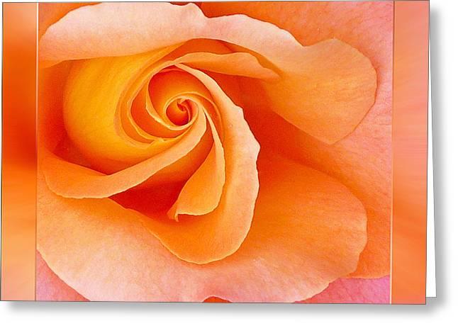 Rose Petals Greeting Cards - Orange Rosebud Highlight Greeting Card by Gill Billington