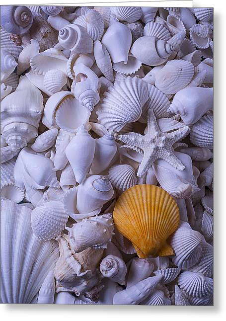 Shell Texture Greeting Cards - Orange Sea Shell Greeting Card by Garry Gay