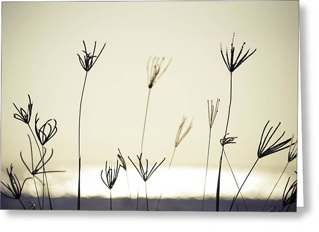 Over-exposed Greeting Cards - Orange Seagrass Greeting Card by VistoOnce Photography