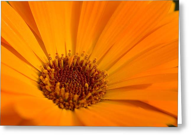 Lilac Pyrography Greeting Cards - Orange Greeting Card by Steffen Gierok