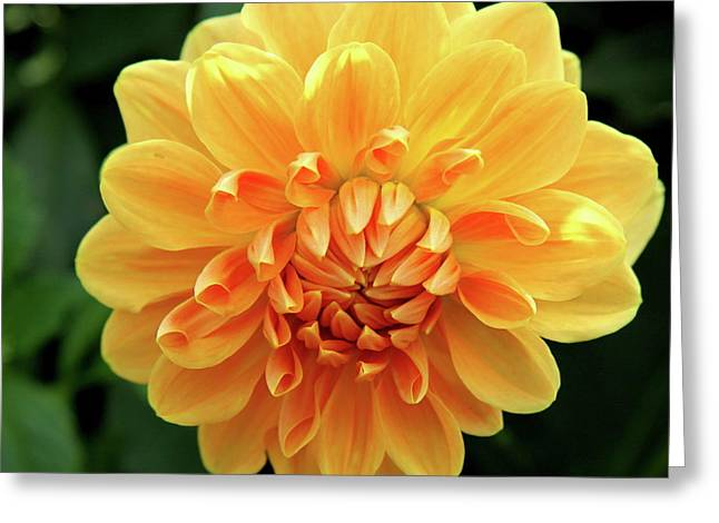 Bloosom Greeting Cards - Orange Sun Greeting Card by Christiane Schulze Art And Photography