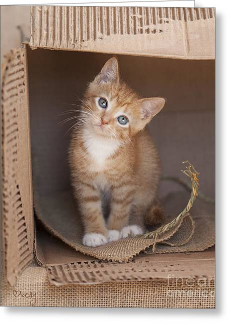 Best Sellers -  - Cardboard Greeting Cards - Orange Tabby Kitten in Box 4360 Greeting Card by Kelly Richardson