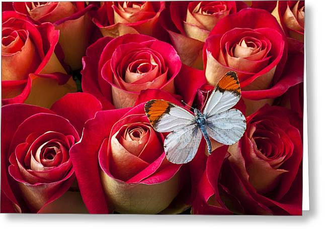 Orange tip butterfly Greeting Card by Garry Gay