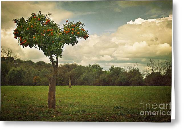 Texture Greeting Cards - Orange-tree Landscape Greeting Card by Carlos Caetano