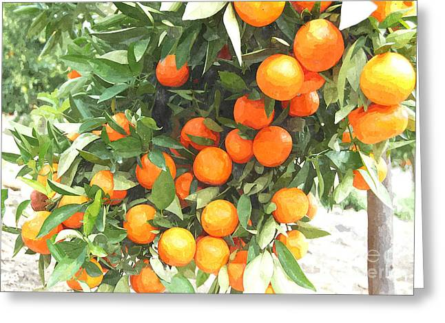 Tangerine Greeting Cards - Orange Trees With Fruits On Plantation Greeting Card by Lanjee Chee
