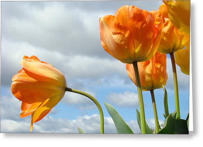 Art Heals Greeting Cards - Orange Tulip Flowers art prints Tulips Floral Greeting Card by Baslee Troutman