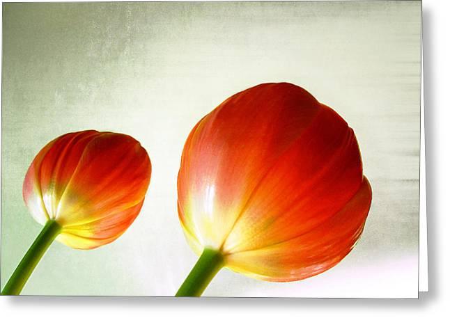 Julie Magers Soulen Greeting Cards - Orange Tulip Pops Greeting Card by Julie Magers Soulen
