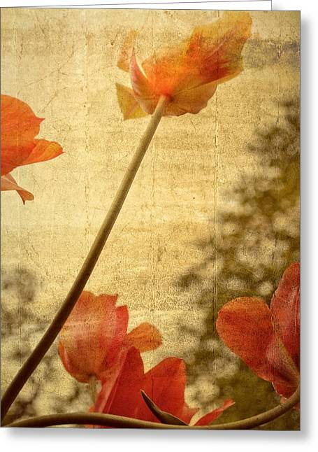 Photograph Greeting Card featuring the photograph Orange Tulips  by Michelle Calkins