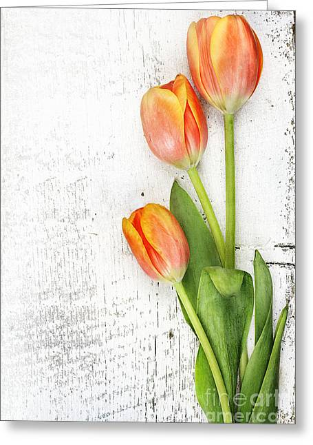 Easter Flowers Greeting Cards - Orange Tulips Greeting Card by Stephanie Frey