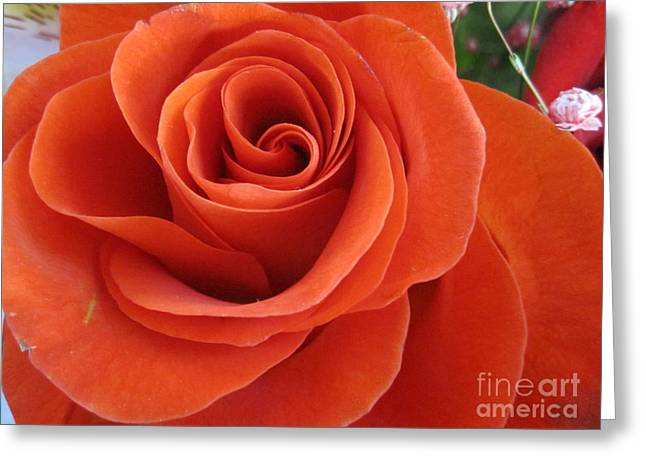 Texture Floral Drawings Greeting Cards - Orange Twist Rose 2 Greeting Card by Tara  Shalton